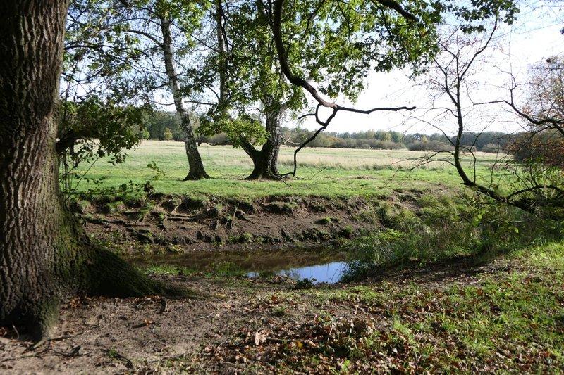 Zu sehen sind ein Fluss und Bäume. Das Bild wird von einem besonders stämmigen Baum am linken Bildrand eingerahmt.